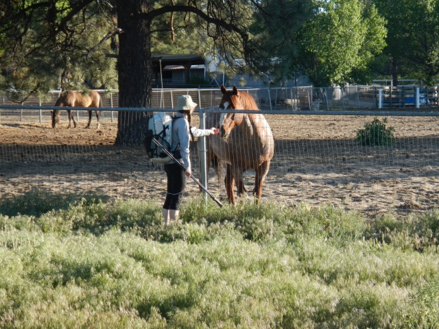 Beautiful ranches with horses for me to neigh at!!